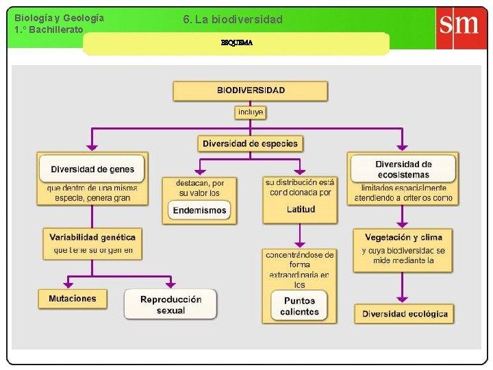 Biología y Geología 1. º Bachillerato 6. La biodiversidad ESQUEMA
