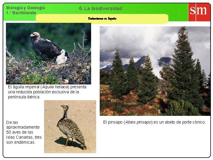 Biología y Geología 1. º Bachillerato 6. La biodiversidad Endemismos en España El águila