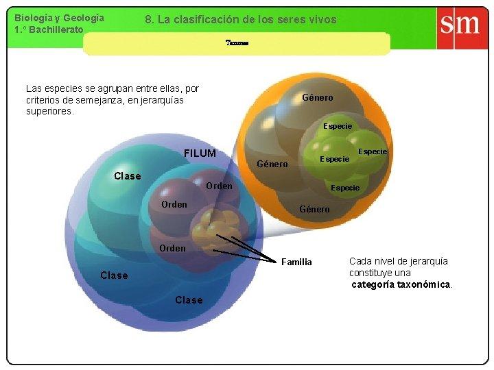 Biología y Geología 1. º Bachillerato 8. La clasificación de los seres vivos Taxones