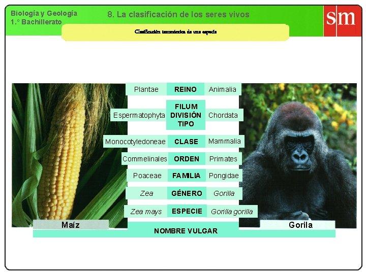 Biología y Geología 1. º Bachillerato 8. La clasificación de los seres vivos Clasificación