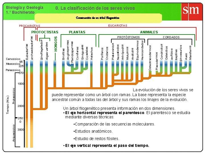 Biología y Geología 1. º Bachillerato 8. La clasificación de los seres vivos Construcción