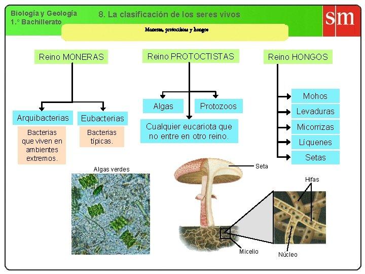 Biología y Geología 1. º Bachillerato 8. La clasificación de los seres vivos Moneras,