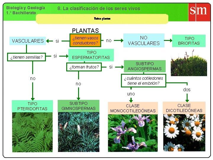 Biología y Geología 1. º Bachillerato 8. La clasificación de los seres vivos Reino