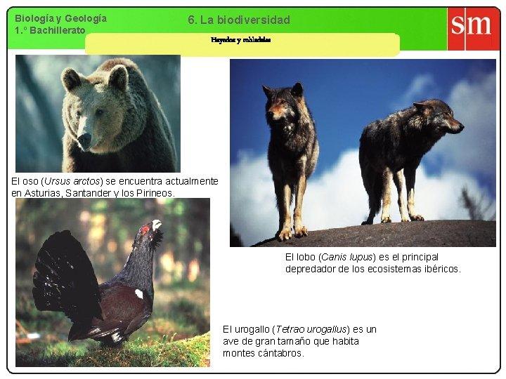 Biología y Geología 1. º Bachillerato 6. La biodiversidad Hayedos y robledales El oso