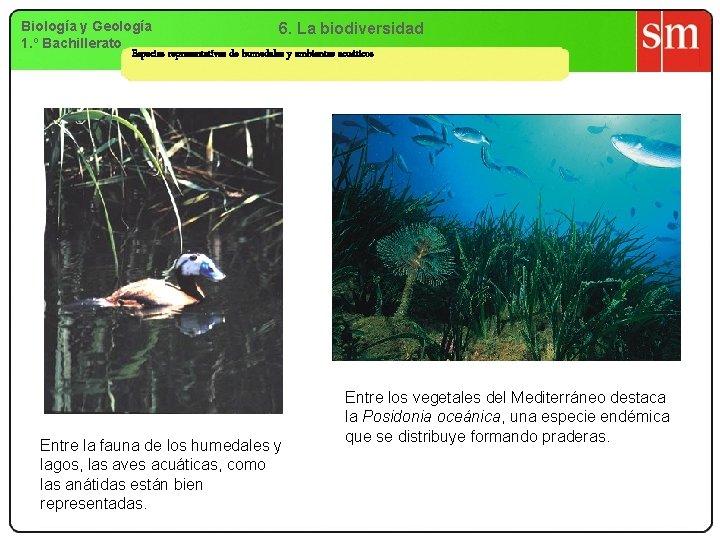 Biología y Geología 6. La biodiversidad 1. º Bachillerato Especies representativas de humedales y