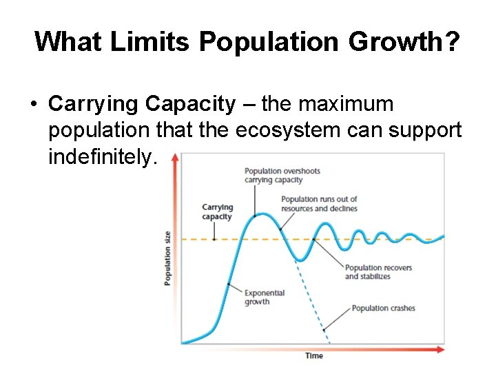 What Limits Population Growth? • Carrying Capacity – the maximum population that the ecosystem