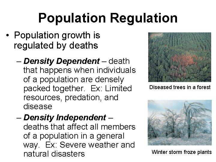 Population Regulation • Population growth is regulated by deaths – Density Dependent – death