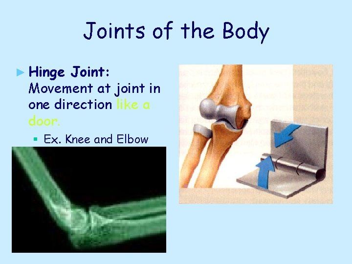 Joints of the Body ► Hinge Joint: Movement at joint in one direction like