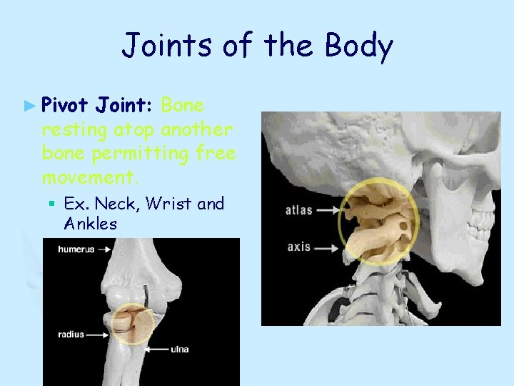 Joints of the Body ► Pivot Joint: Bone resting atop another bone permitting free
