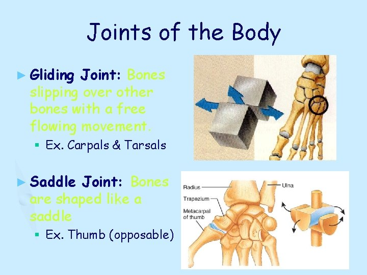 Joints of the Body ► Gliding Joint: Bones slipping over other bones with a