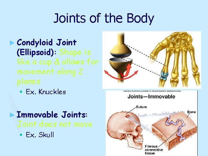 Joints of the Body ► Condyloid Joint (Ellipsoid): Shape is like a cup &