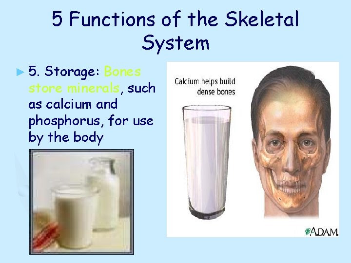 5 Functions of the Skeletal System ► 5. Storage: Bones store minerals, such as