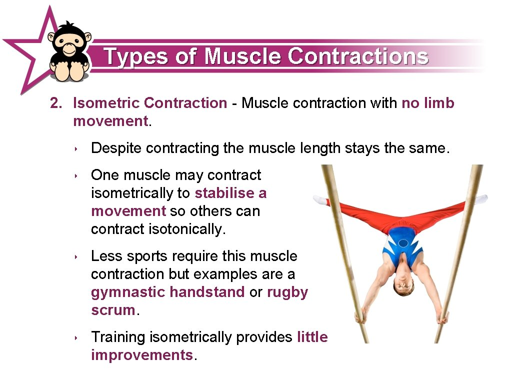 Types of Muscle Contractions 2. Isometric Contraction - Muscle contraction with no limb movement.
