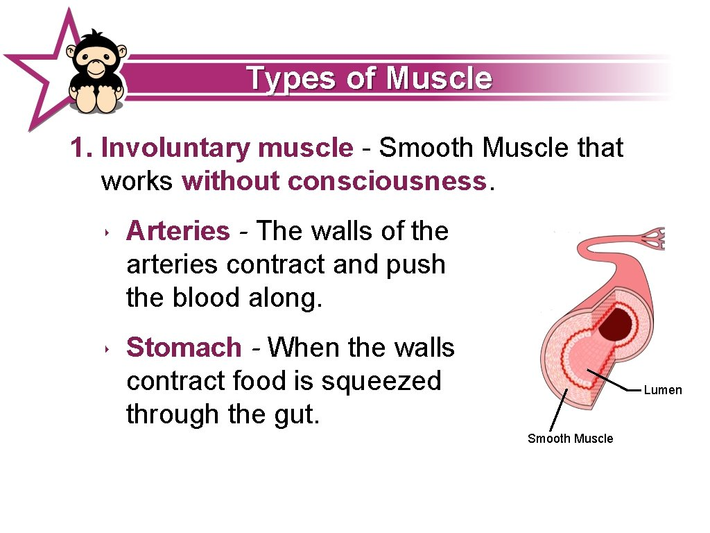 Types of Muscle 1. Involuntary muscle - Smooth Muscle that works without consciousness. ‣