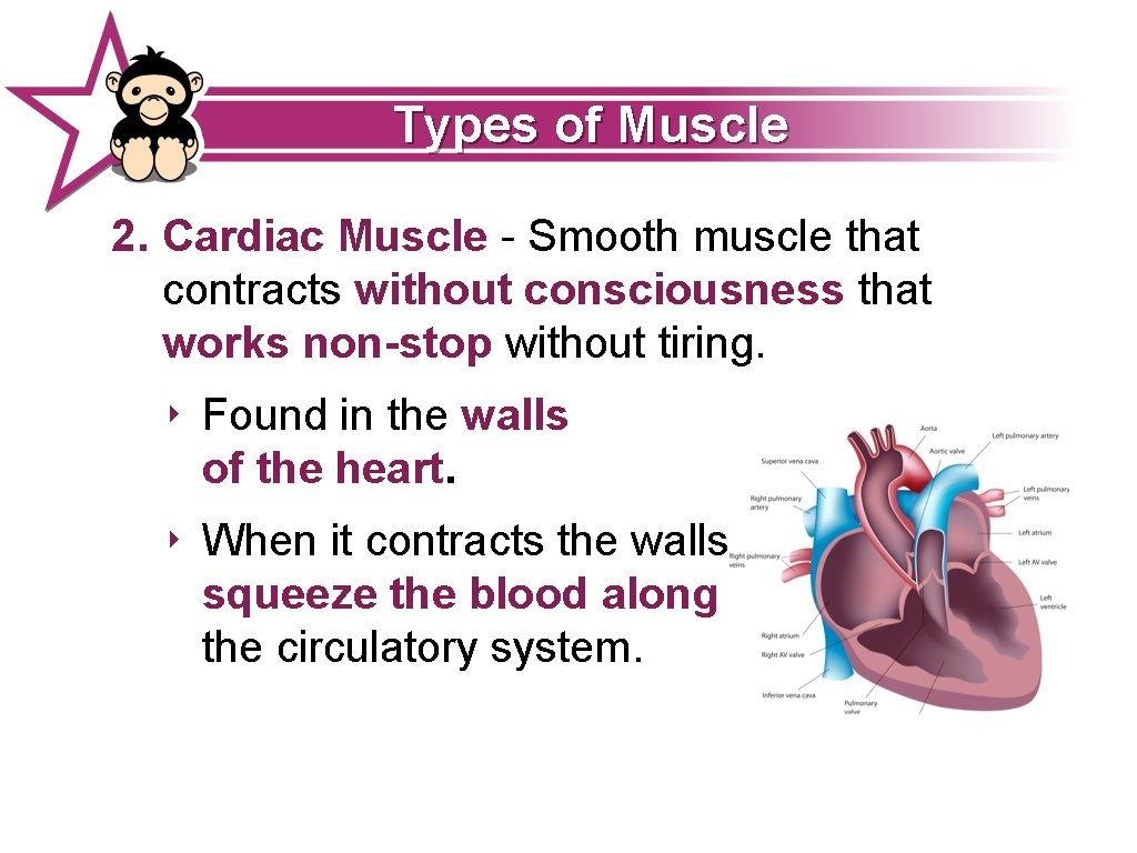 Types of Muscle 2. Cardiac Muscle - Smooth muscle that contracts without consciousness that