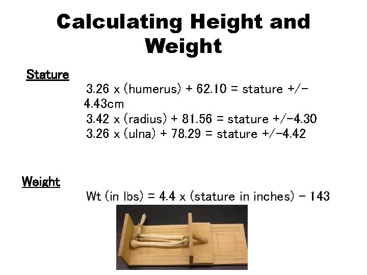 Calculating Height and Weight Stature 3. 26 x (humerus) + 62. 10 = stature