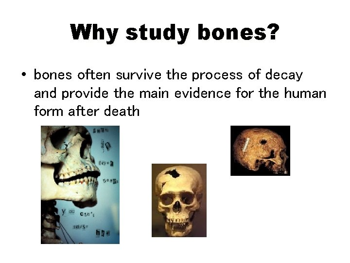 Why study bones? • bones often survive the process of decay and provide the