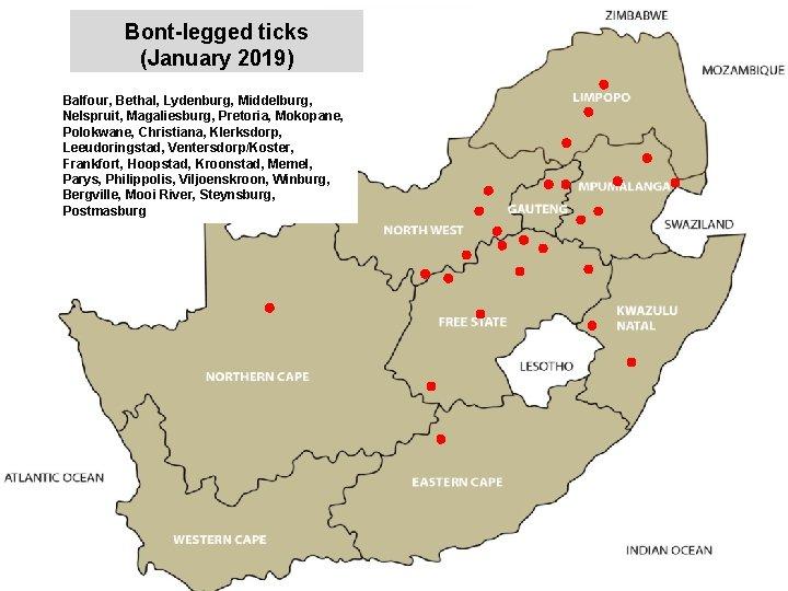 Bont-legged ticks (January 2019) Balfour, Bethal, Lydenburg, Middelburg, Nelspruit, Magaliesburg, Pretoria, Mokopane, Polokwane, Christiana,