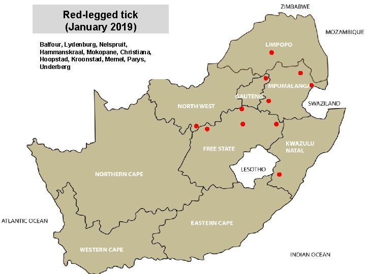 Red-legged tick (January 2019) Balfour, Lydenburg, Nelspruit, Hammanskraal, Mokopane, Christiana, Hoopstad, Kroonstad, Memel, Parys,