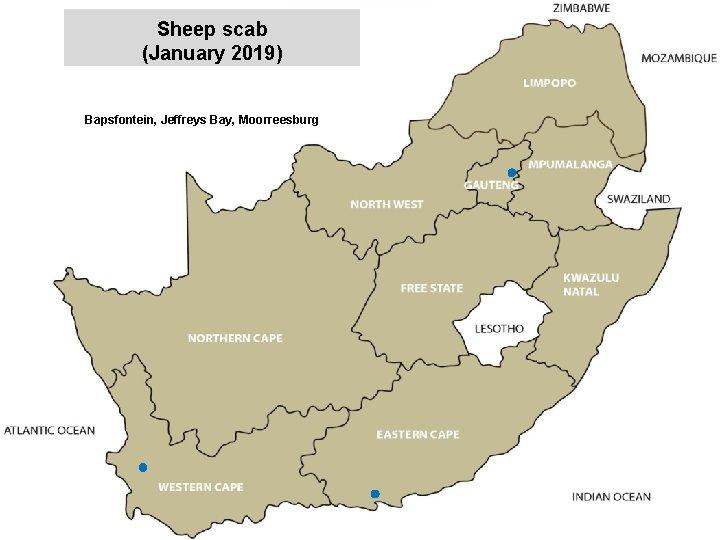 Sheep scab (January 2019) jkccff Bapsfontein, Jeffreys Bay, Moorreesburg