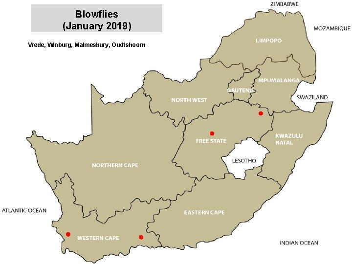 Blowflies (January 2019) Vrede, Winburg, Malmesbury, Oudtshoorn jkccff