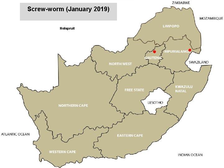 Screw-worm (January 2019) Nelspruit jkccff