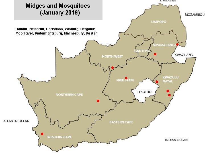 Midges and Mosquitoes (January 2019) jkccff Balfour, Nelspruit, Christiana, Winburg, Bergville, Mooi River, Pietermaritzburg,