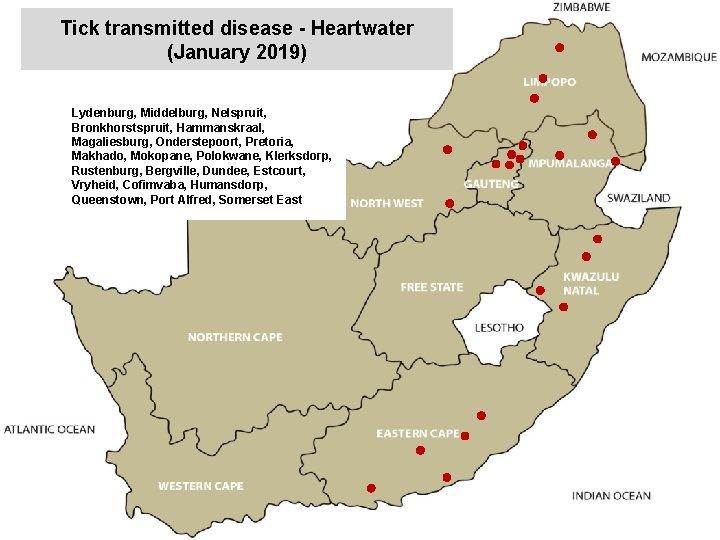 Tick transmitted disease - Heartwater (January 2019) Lydenburg, Middelburg, Nelspruit, Bronkhorstspruit, Hammanskraal, Magaliesburg, Onderstepoort,