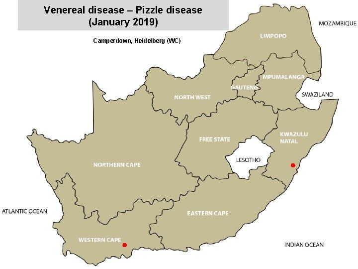 Venereal disease – Pizzle disease (January 2019) Camperdown, Heidelberg (WC) x