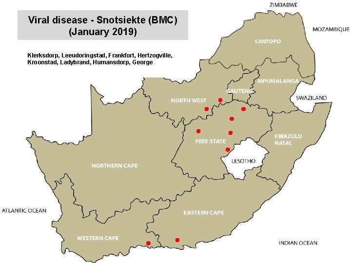 Viral disease - Snotsiekte (BMC) (January 2019) kjkjnmn Klerksdorp, Leeudoringstad, Frankfort, Hertzogville, Kroonstad, Ladybrand,