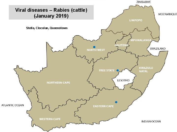 Viral diseases – Rabies (cattle) (January 2019) kjkjnmn Stella, Clocolan, Queenstown