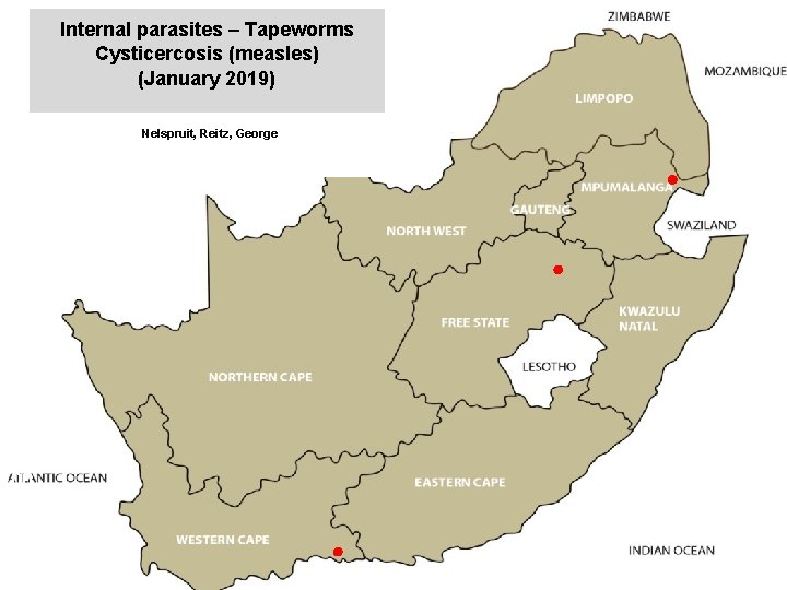 Internal parasites – Tapeworms Cysticercosis (measles) (January 2019) jkccff Nelspruit, Reitz, George 00