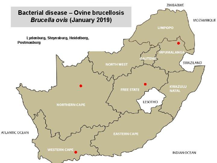 Bacterial disease – Ovine brucellosis Brucella ovis (January 2019) kjkjnmn Lydenburg, Steynsburg, Heidelberg, Postmasburg