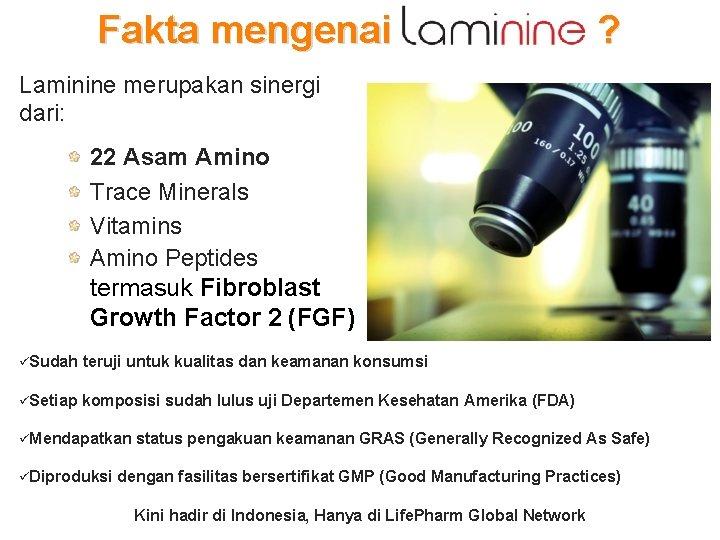 Fakta mengenai ? Laminine merupakan sinergi dari: 22 Asam Amino Trace Minerals Vitamins Amino