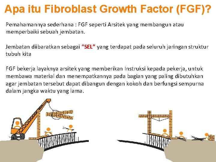 Apa itu Fibroblast Growth Factor (FGF)? Pemahamannya sederhana : FGF seperti Arsitek yang membangun