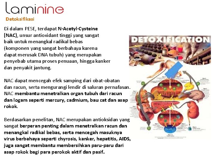 Detoksifikasi Di dalam PESE, terdapat N-Acetyl-Cysteine (NAC), unsur antioxidant tinggi yang sangat baik untuk