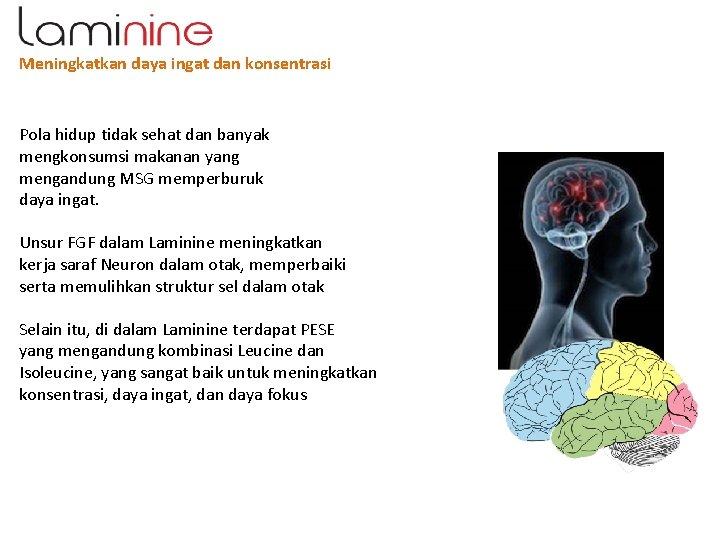 Meningkatkan daya ingat dan konsentrasi Pola hidup tidak sehat dan banyak mengkonsumsi makanan yang