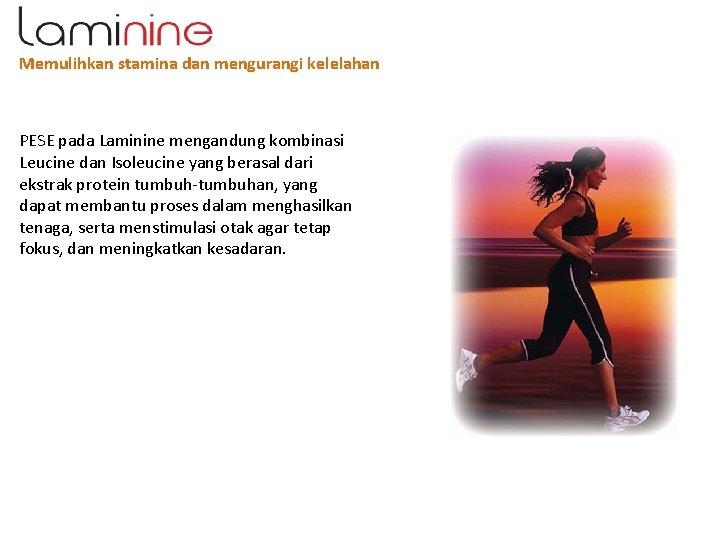 Memulihkan stamina dan mengurangi kelelahan PESE pada Laminine mengandung kombinasi Leucine dan Isoleucine yang