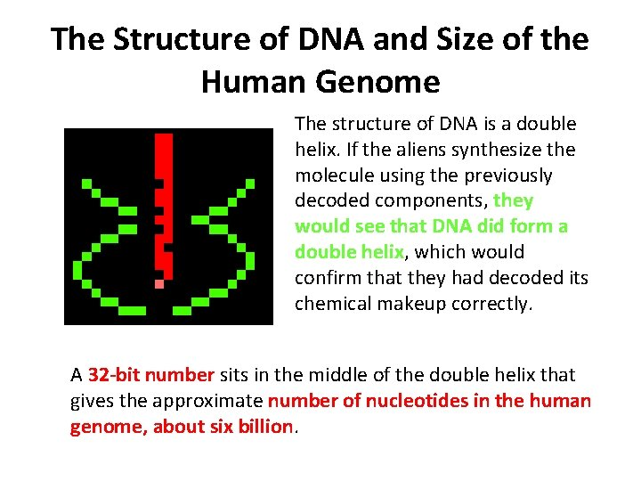 The Structure of DNA and Size of the Human Genome The structure of DNA
