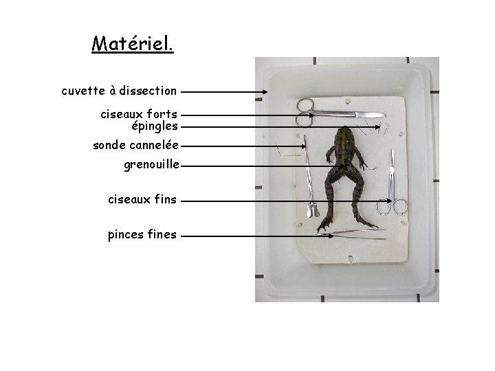 Matériel. cuvette à dissection ciseaux forts épingles sonde cannelée grenouille ciseaux fins pinces fines