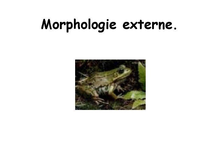 Morphologie externe.