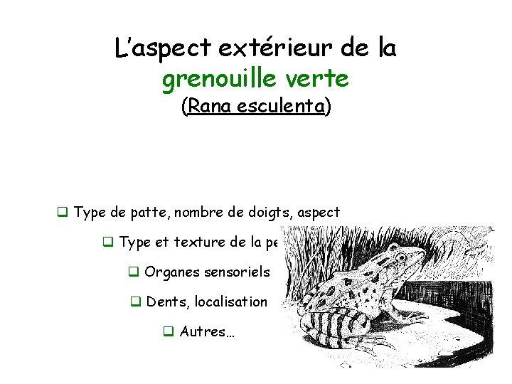 L'aspect extérieur de la grenouille verte (Rana esculenta) q Type de patte, nombre de