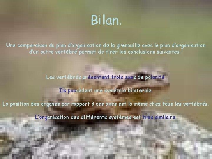 Bilan. Une comparaison du plan d'organisation de la grenouille avec le plan d'organisation d'un