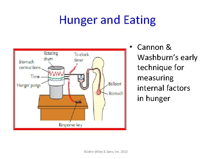 Hunger and Eating • Cannon & Washburn's early technique for measuring internal factors in