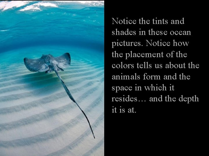 Notice the tints and shades in these ocean pictures. Notice how the placement of