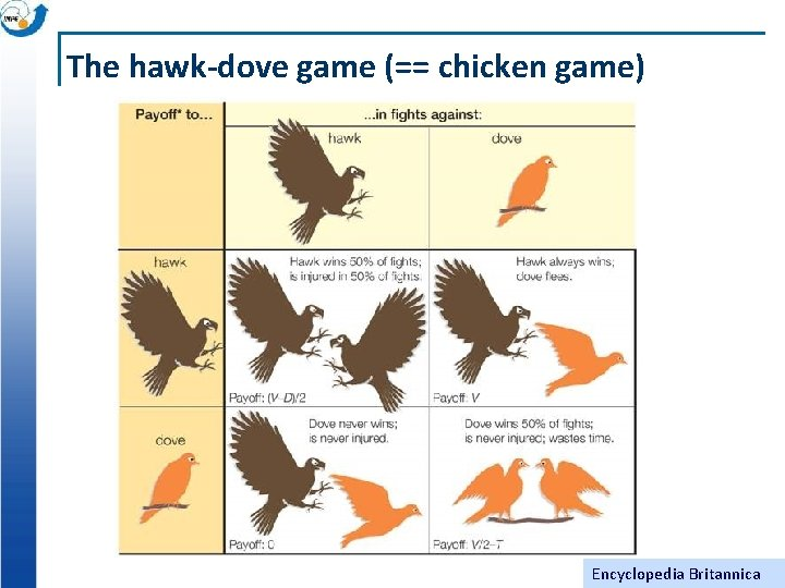 The hawk-dove game (== chicken game) Encyclopedia Britannica