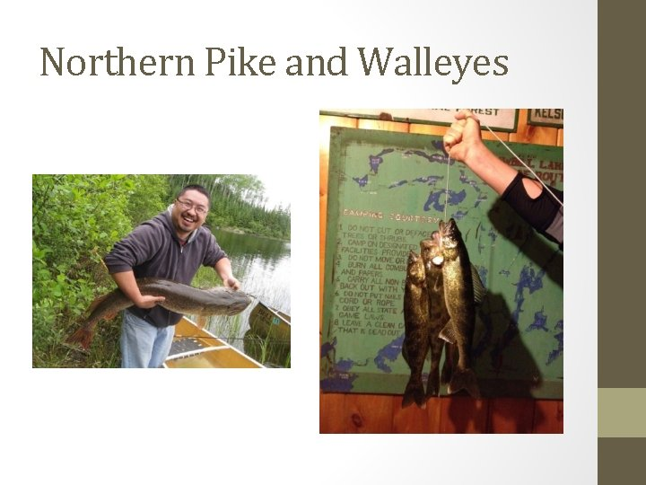Northern Pike and Walleyes
