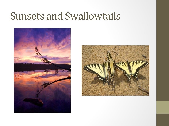 Sunsets and Swallowtails