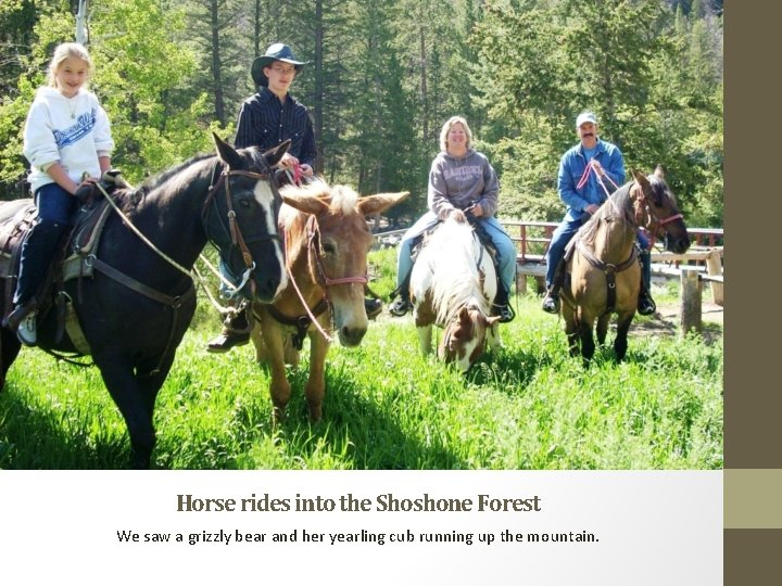 Horse rides into the Shoshone Forest We saw a grizzly bear and her yearling