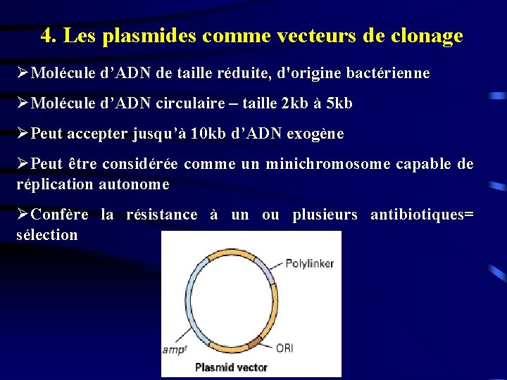 4. Les plasmides comme vecteurs de clonage ØMolécule d'ADN de taille réduite, d'origine bactérienne